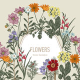 Wildflowers. Vector illustration in vintage style. Festive postcard. Botanical drawing Royalty Free Stock Photo