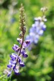 Wildflowers verdes hermosos Fotografía de archivo