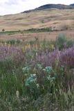Wildflowers verticali in Yellowstone Immagini Stock