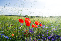 Wildflowers. Very good weekend on the field on the year Stock Images