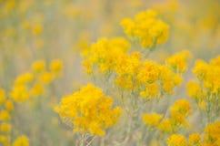 Wildflowers vibrants d'or Photographie stock libre de droits