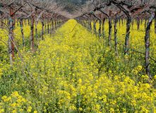 Wildflowers in the vineyard Royalty Free Stock Images