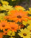 Wildflowers in volledige zon Stock Foto's
