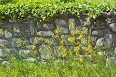 Wildflowers voor steen behoudende muur Stock Foto's