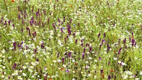 Wildflowers w łąkach 2 zdjęcia royalty free