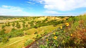Wildflowers w badlands parku narodowym zbiory