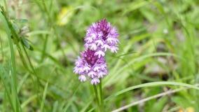 Wildflowers w drewnach fotografia royalty free