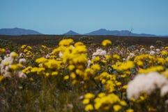 Wildflowers w Fitzgerald rzeki parku narodowym Obrazy Royalty Free