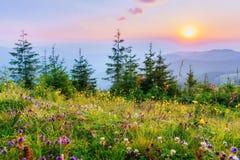 Wildflowers w górach przy zmierzchem zdjęcie stock