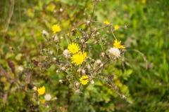 Wildflowers w lesie Zdjęcia Royalty Free
