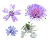 Wildflowers w odosobnieniu Zdjęcie Stock