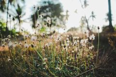 Wildflowers w polu fotografia royalty free