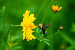 Wildflowers w popióle z motylem Obraz Stock