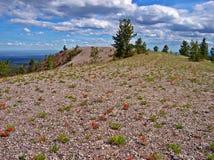 Wildflowers w pustkowiu Obrazy Stock