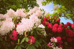 Wildflowers w Waszyngton Obraz Royalty Free