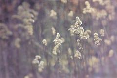 Wildflowers w zimnym świetle Styczeń parafia zdjęcie stock