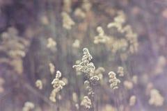 Wildflowers w zimnym świetle Styczeń parafia zdjęcia stock