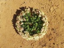 Wreath flowers Western Australia royalty free stock photography
