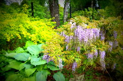 Wildflowers in Washington Stock Foto