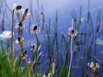 Wildflowers and water Stock Image