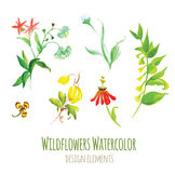 Wildflowers watercolor design elements set Stock Photo