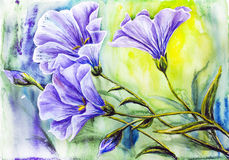 Wildflowers. Watercolor painting. Stock Photos