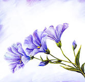 Wildflowers. Watercolor painting. Stock Image