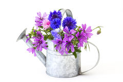 Wildflowers in watering can, Royalty Free Stock Photography