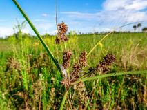 Pine glades natural area in Florida swamps. Wildflowers and weeds in the Florida Swamps Stock Image