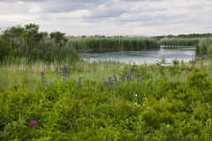 Wildflowers and the West Pond Royalty Free Stock Images