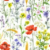 Wildflowers and Wheat Ears Seamless Pattern. Hand drawn floral seamless pattern made with watercolor wildflowers, red poppies and ripe wheat ears. Summer flowers Royalty Free Stock Photo