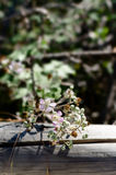 Wildflowers. Wild flowers on a fence post. Selective focus Royalty Free Stock Photography