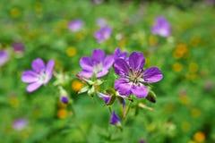 Wildflowers. Wild flowers of field horizontally Stock Images