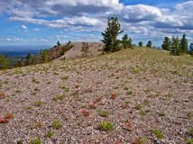 Wildflowers in the Wilderness. Wildflowers carpet The Dome, a volcanic formation on the southeast side of Paulina Peak - Newberry National Volcanic Monument stock images