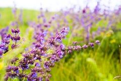 wildflowers Wildflowerweide Bloemboeketten Bloem en mooie bloemblaadjes Stock Afbeelding