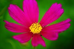 Wildflowers in Wind Dichte Omhooggaand royalty-vrije stock afbeeldingen