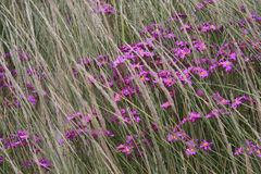 Wildflowers and Windblown Grasses Stock Photo