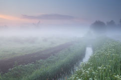 Wildflowers and windmill in dense morning fog Royalty Free Stock Photography