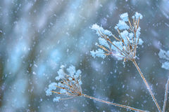 Wildflowers in winter Stock Images