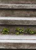 Wildflowers on wooden steps rustic style, one place for text royalty free stock images