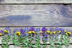 Wildflowers on a wooden surface.the Stock Photos