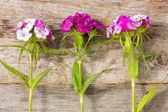 Wildflowers  and wooden wall Stock Images