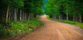 Wildflowers Wzdłuż Kolorado okręgu administracyjnego drogi fotografia royalty free