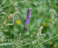 Wildflowers y abeja Fotos de archivo libres de regalías