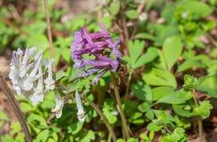 Wildflowers y abeja Imagen de archivo