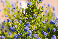 Wildflowers y abeja azules Primer Imagen de archivo