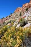 Wildflowers y acantilados rocosos de Utah Imágenes de archivo libres de regalías