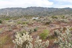 Wildflowers y cacto del desierto en la floración. Fotos de archivo