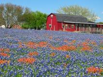 Wildflowers y casa roja foto de archivo