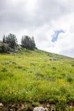 Wildflowers y cielo Fotografía de archivo
